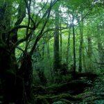 【屋久島】雄大な自然、鹿児島1【日本好好玩】