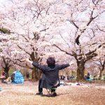 【介绍日本】花見 / Hanami【INTRODUCE JAPAN】