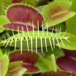 【7月18日号】Carnivorous plants expo / 虫を食べる植物展